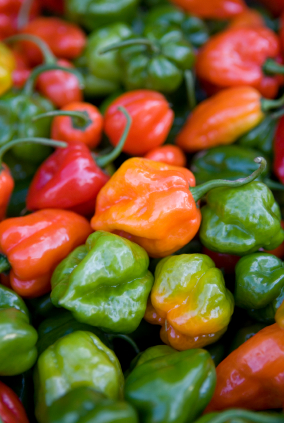 Pickled Habanero Chilies | This Dame Cooks Blog